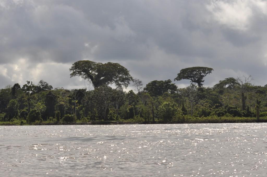 Amazonas-Regenwald bei Leticia